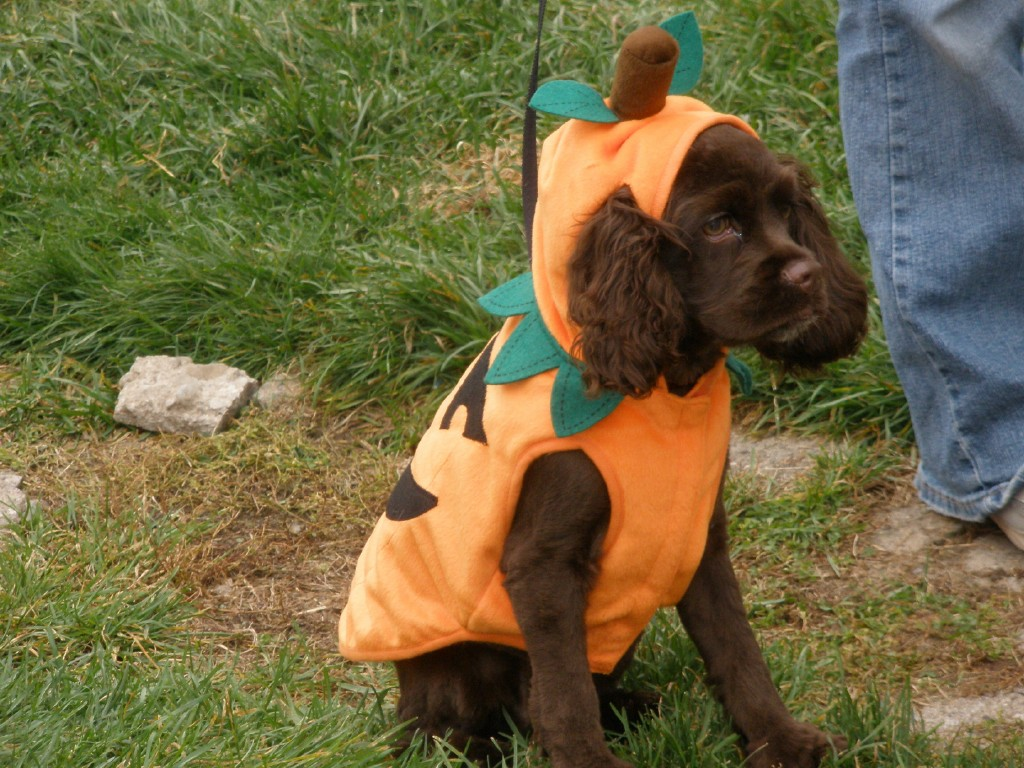 Bella again as the Great Pumpkin